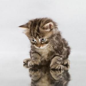 varför spinner katten